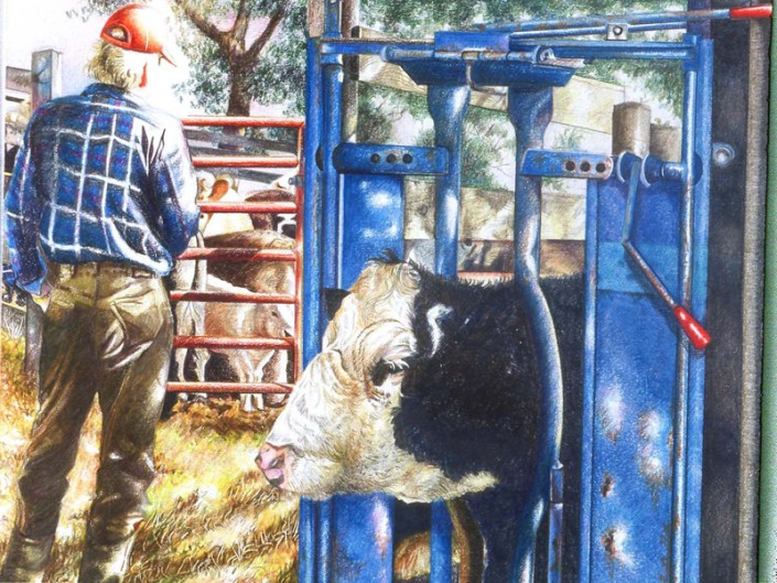 Working Cattle ©Blair Jackson