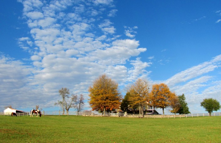 High Farm - Photo by Blair Jackson