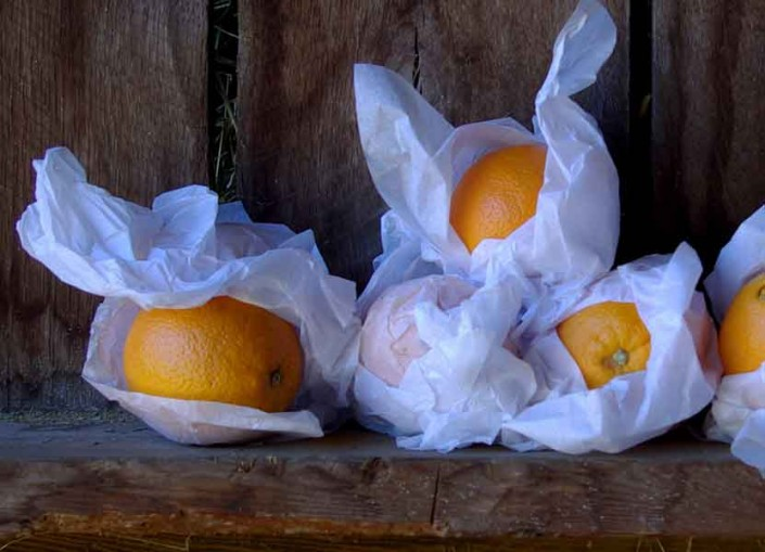 Still Life with Oranges - Photo by Blair Jackson