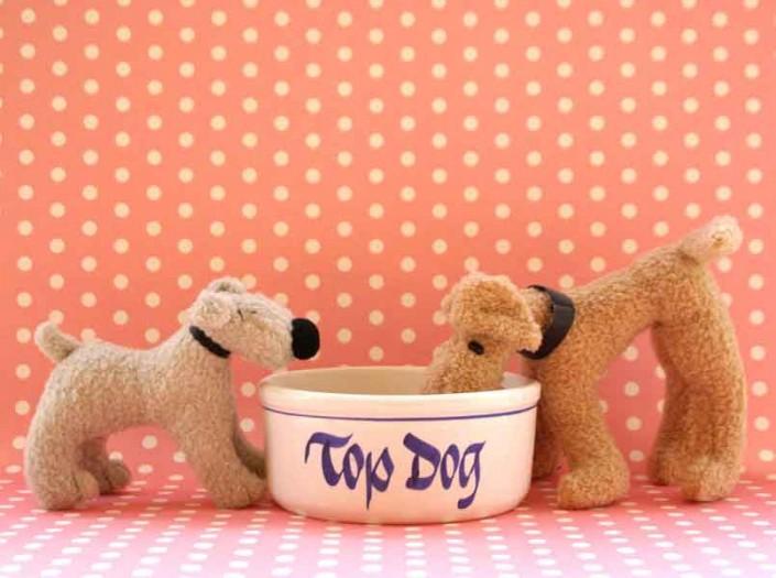 Top Dog - Photo by Blair Jackson